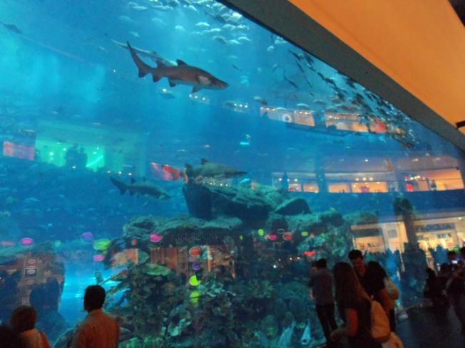 Dubai aquario